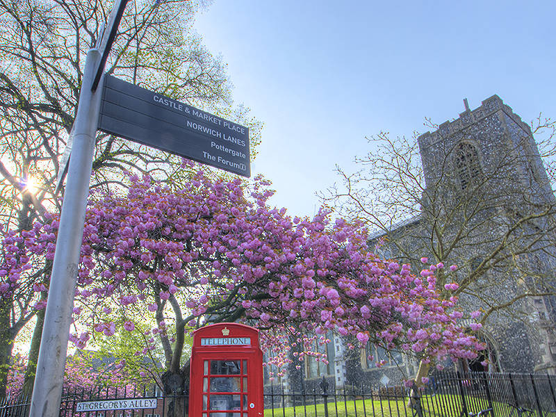 The background is filled with blue sky & a flint church. There is a pink cherry blossom tree, in full bloom. In front of the tree is a red telephone box.